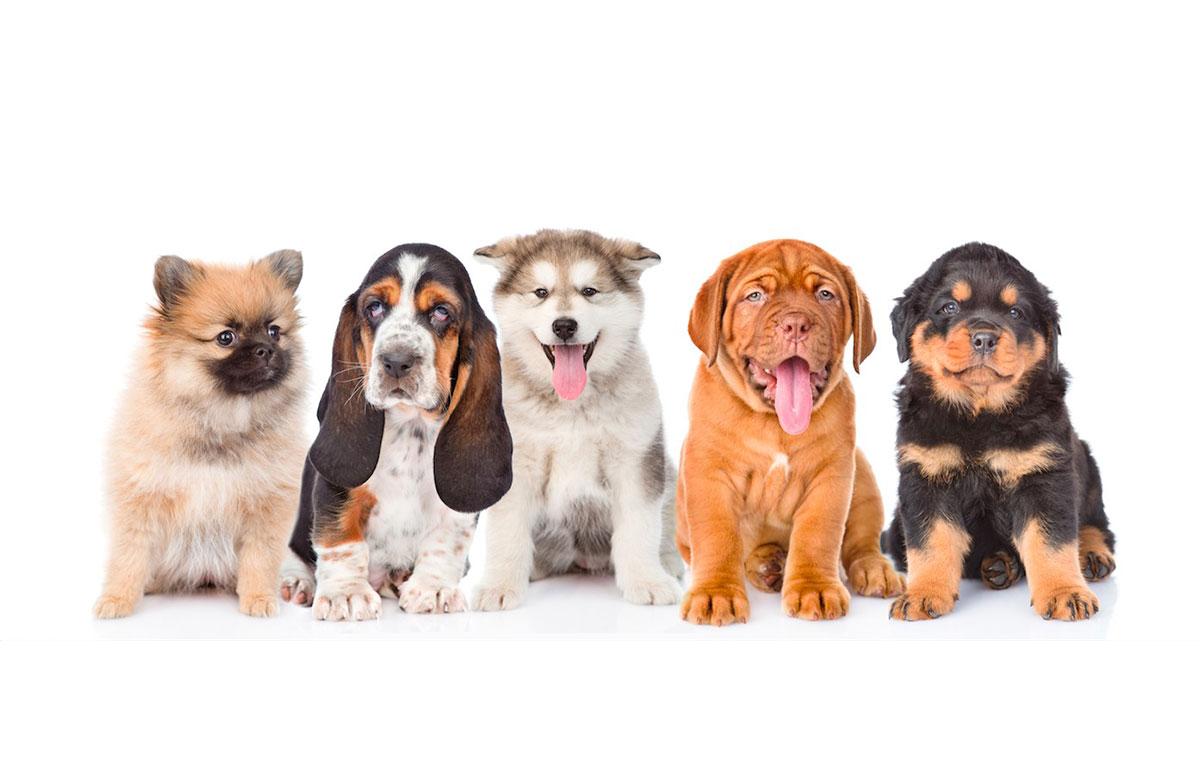 Cachorros al parvulario
