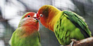 El ABC de las aves de jaula