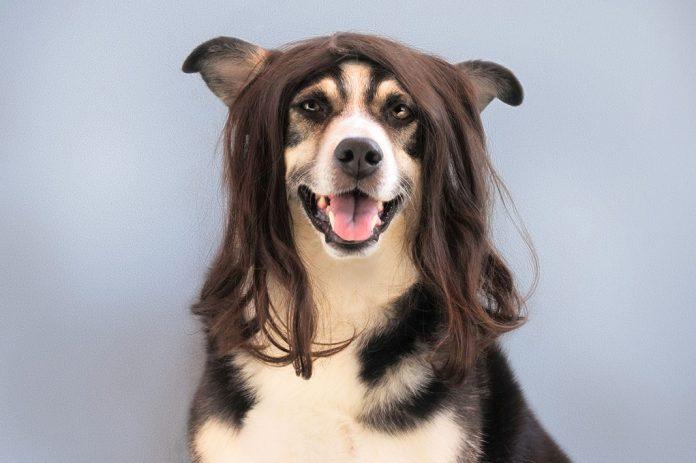 Peinado de perros