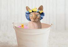 Las cosas que tu gato no soporta