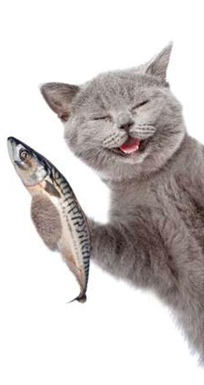 Alimentación de tu gato. La dieta perfecta.