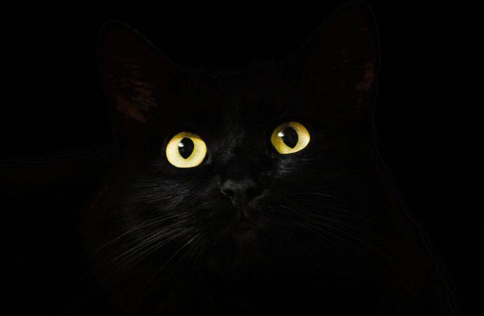 Mentiras y verdades sobre el comportamiento de los gatos