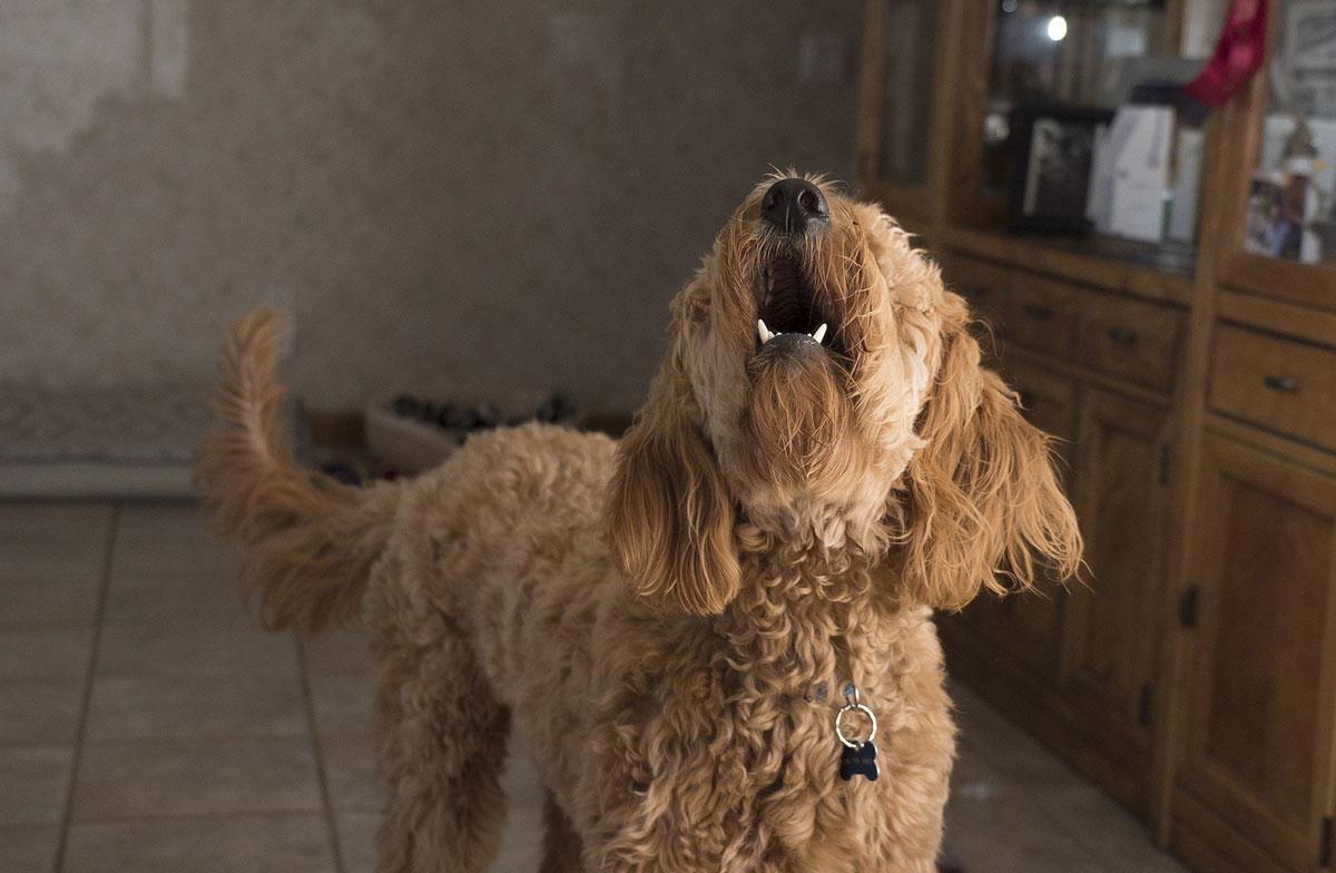 Cosas raras hace perro