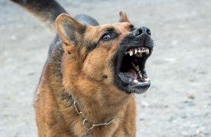 Miedos irracionales en perros