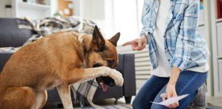 Reeducar perro adulto