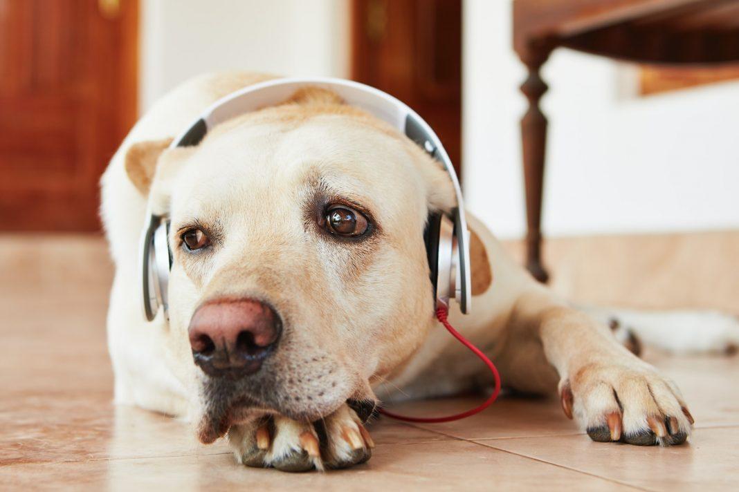 Spotify crea listas musicales para mascotas