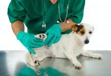 Terapias para los problemas de artritis
