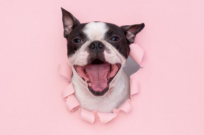 ¡a mi perro le huele el aliento! - The Pets