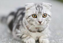 Mi gato se acurrucó en silencio frente a otro gato