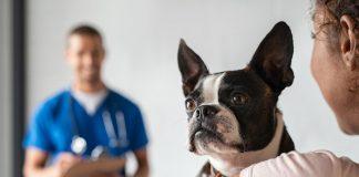 Castración canina