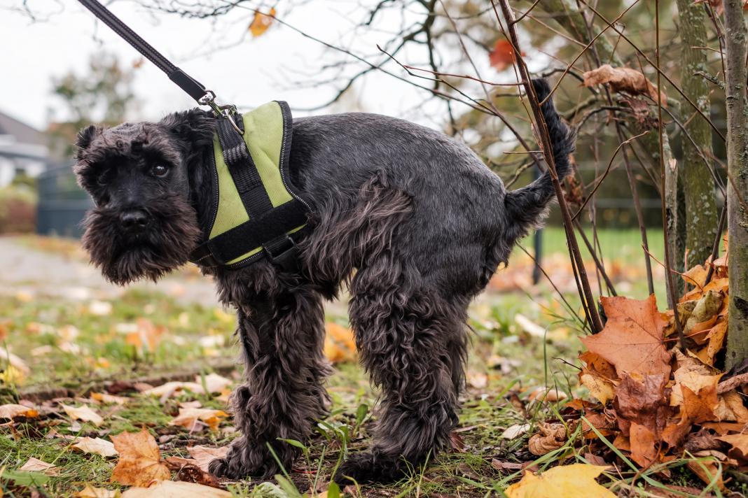 Negra, marrón, rojiza... dependiendo del color, sabrás todo lo que una caca te puede contar sobre la salud de tu perro