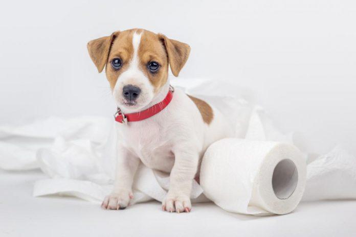 Caca y salud de tu perro