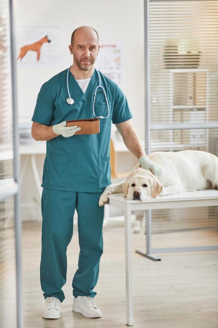 Perros con cáncer de piel