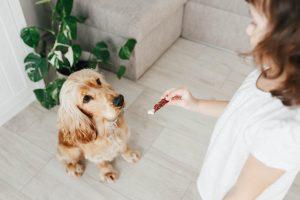 Snaks para perros