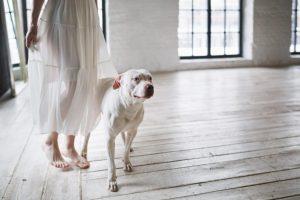 Los perros diagnostican enfermedades