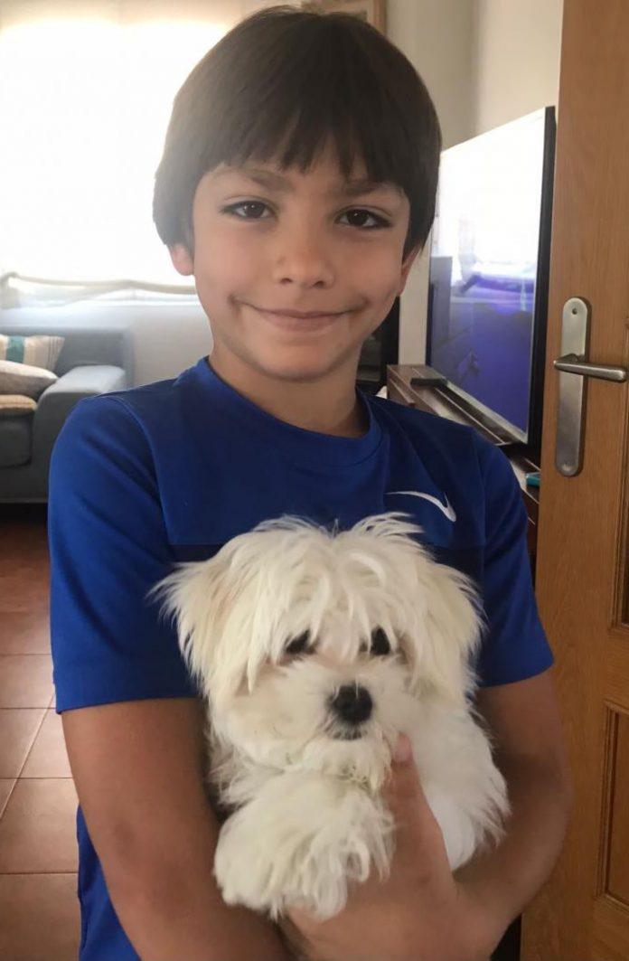 Cooper es un Bichón Maltés de poco más de tres meses de edad