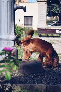 pis de perro huele a pescado